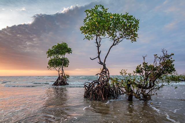 Mangrovníkové lesy Yucatán