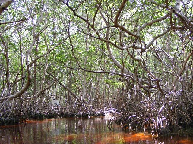 Mangrovové lesy dusík