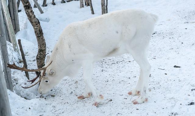 jelen na sněhu